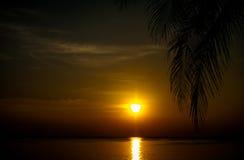 Solnedgångkokospalm 3 Arkivbild