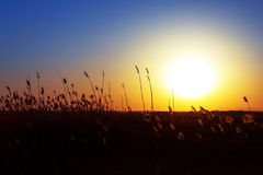 Solnedgånglandskap Arkivbild