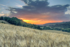 Solnedgånglandskap av Tuscan gröna kullar Arkivfoto