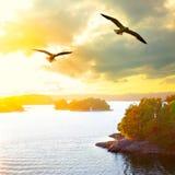 Solnedgånglandskap med flygseagulls Royaltyfria Bilder