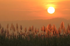 Solnedgånglandskap med gräs royaltyfria foton