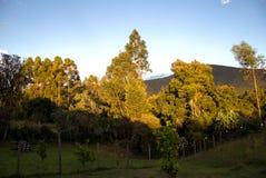 Solnedgångljus som exponerar en skog för eukalyptusträd arkivbild
