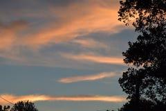 Solnedgångmoln blått och apelsin med en trädkontur Royaltyfri Foto
