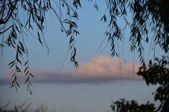 Solnedgångmoln blått och rosa färger med en trädkontur Fotografering för Bildbyråer
