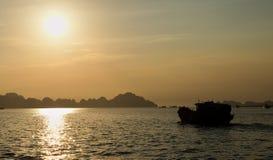 Solnedgångmummel skäller länge arkivbild