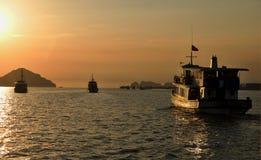 Solnedgångmummel skäller länge royaltyfria bilder