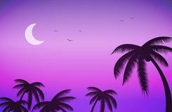 Solnedgångnatthimmel och palmträd Royaltyfri Foto