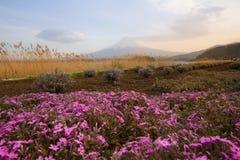 Solnedgångplats av Fuji Mt och härliga blommor på våren Royaltyfria Foton
