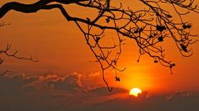 Solnedgångplats med solen, kontur av filialen av trädet royaltyfri fotografi