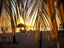 solnedgångplats som inramas av palmblad Royaltyfria Foton