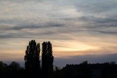 Solnedgångsikt av konturträd arkivfoton