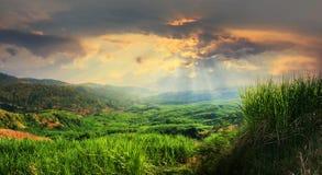 Solnedgångsikt av sockerrörkolonifältet arkivbild