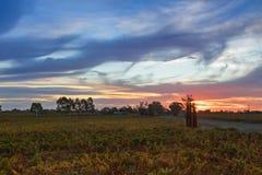 Solnedgångsikt av vingården i aftonen i Coonawarra vinodlingregistrering Arkivbild