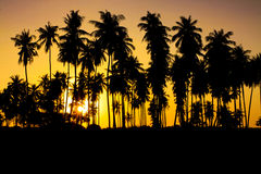 SolnedgångSilhouette Fotografering för Bildbyråer
