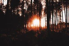 Solnedgångskog fotografering för bildbyråer