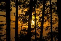 Solnedgångskog Arkivfoto