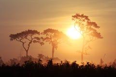 SolnedgångskymningPhu Kradueng nationalpark Arkivfoto