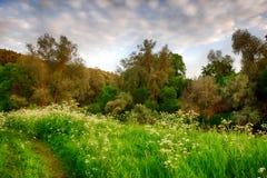Solnedgångsoluppgång i våren barrträds- Forest Trees Naturträn HDR Arkivfoto