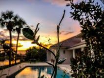 solnedgångspindelrengöringsduk arkivfoto