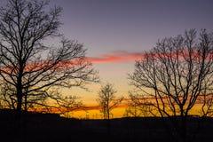 Solnedgångstället med några enkla träd arkivfoto