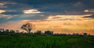 Solnedgångstrålar, gräs och träd i byn Arkivfoto