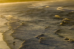 solnedgångsurfare royaltyfri fotografi