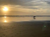 Solnedgångsurfare på stranden arkivbilder