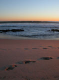 solnedgångsurfarear royaltyfri foto