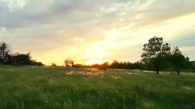 Solnedgångtid på den gröna ängen stock video