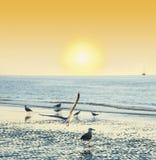 Solnedgångtid på en strand med fåglar Royaltyfri Foto