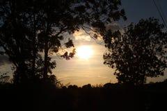 Solnedgångtidträd arkivbild