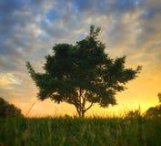Solnedgångträd Arkivbild