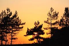 Solnedgångträd Royaltyfri Fotografi
