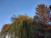 Solnedgångträd Royaltyfria Bilder