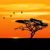 Solnedgångträd och fågelkonturer arkivbild