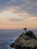 Solnedgångträd på punkt Lobos som förbiser havet Royaltyfri Bild