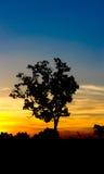 Solnedgångträdkontur, blått, guld- himmel, Thailand Arkivbilder