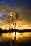 Solnedgångträdreflexion på floden royaltyfri bild