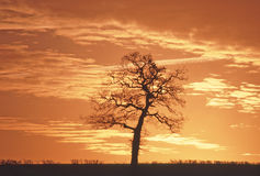 solnedgångtree Royaltyfria Bilder