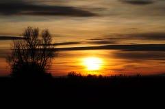 solnedgångtree royaltyfri foto