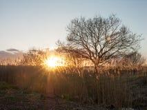 Solnedgångvasser Royaltyfri Foto