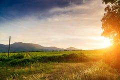 Solnedgångvingårdar I avståndsbergen Arkivbild