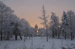 Solnedgångvinterfärger i ett enormt parkerar med träd som täckas med snö fotografering för bildbyråer