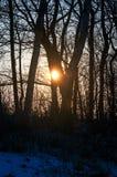 Solnedgångvinterlandskap med ängar och skogen i Geesthacht nära Hamburg fotografering för bildbyråer