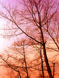 solnedgångvinterträn Royaltyfria Bilder