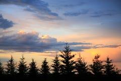 solnedgångwindbreak Arkivbild