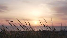 Solnedg?ng i havet Skytte från kusten stock video