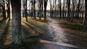 Solnedg?ng i skogen royaltyfria bilder