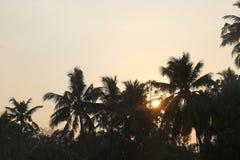 Solnedg?ng mellan tr?d fotografering för bildbyråer