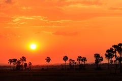 Solnedgång för orange glöd i ett afrikanskt landskap Royaltyfri Foto